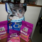 Cat Food Donations